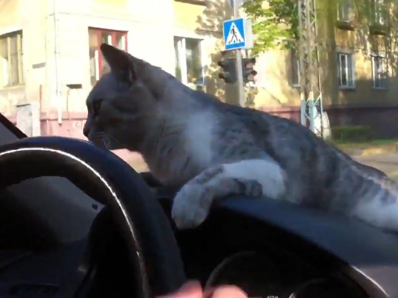 Брянец покатал кошку намашине ивыложил видео