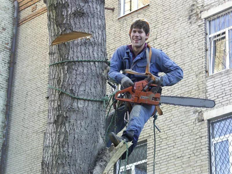 ВБрянске ведутся работы покронированию деревьев